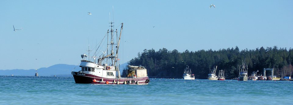 Fishboat Near Denman Island